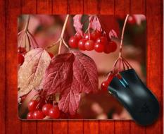 MousePad Red Fruits Photography For Mouse Mat 240*200*3mm Gaming Mice Pad - Intl