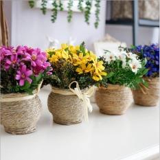50 Biru biji bunga aster tumbuh diseduh sendiri taman bunga