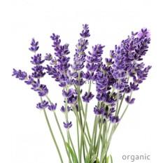 Amefurashi Benih Herb Vera Lavender Lavandula Angustifolia
