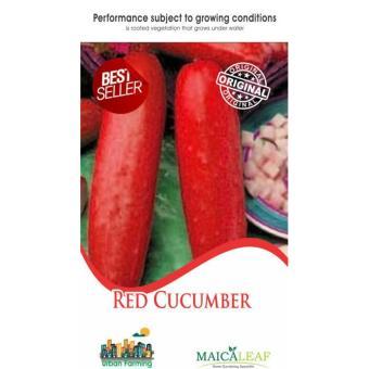 Maica Leaf Buah Mentimun Merah Red Cucumber Benih Tanaman [15Benih]