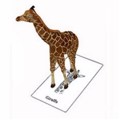 Kartu Animal 4D Edukasi Anak
