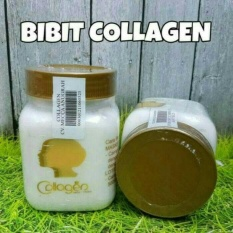 Bibit Collagen Pemutih Kulit CV Mecca