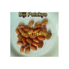 Biji Pelangsing Polokyo (isi 50 biji)
