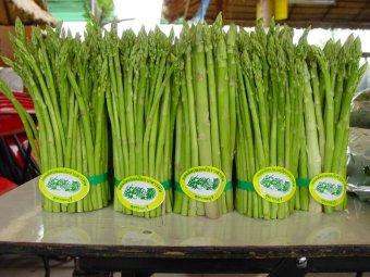 Amefurashi Benih Sayur Asparagus - 3