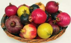 berisi 5 biji benih buah delima import mix