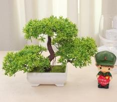 niceEshop bunga bunga dalam pot plastik kecil tanaman Camellia umbi palsu  berdiri di pagar kayu. 0202da967b
