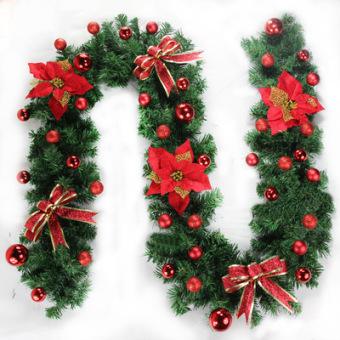 Cabang pinus Natal rotan Natal
