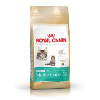 Harga Royal Canin Maine Coon Kitten 36 - 2000gr