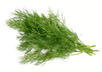 Harga Bibit Bunga Benih Herb Dill