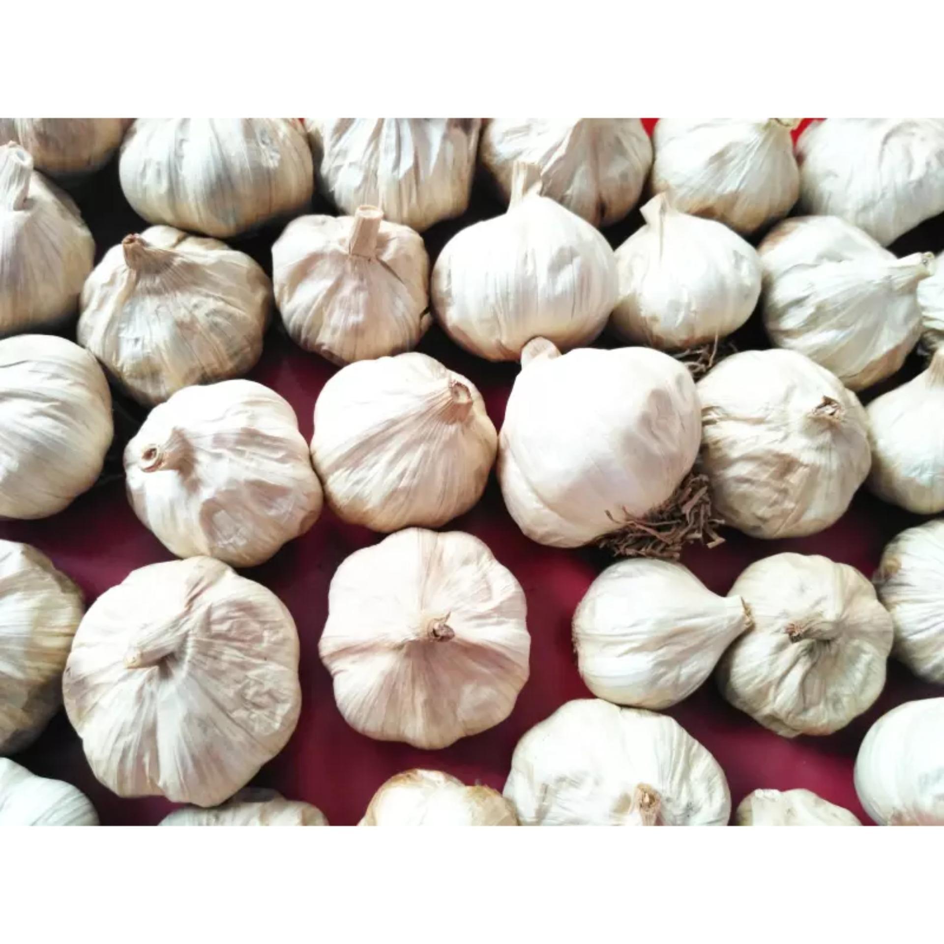 Hot Deals Black Garlic Bawang Hitam Bandingkan Toko Tunggal 500 Gr