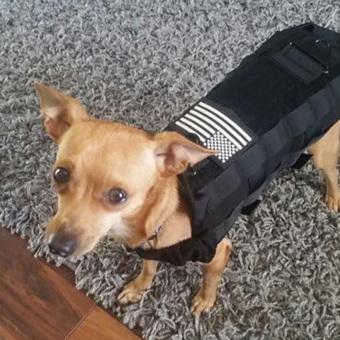 Allwin Luar Ruangan Anjing Militer Taktis Pakaian Rompi Latihan Beban Bantalan Pengaman Hitam 2