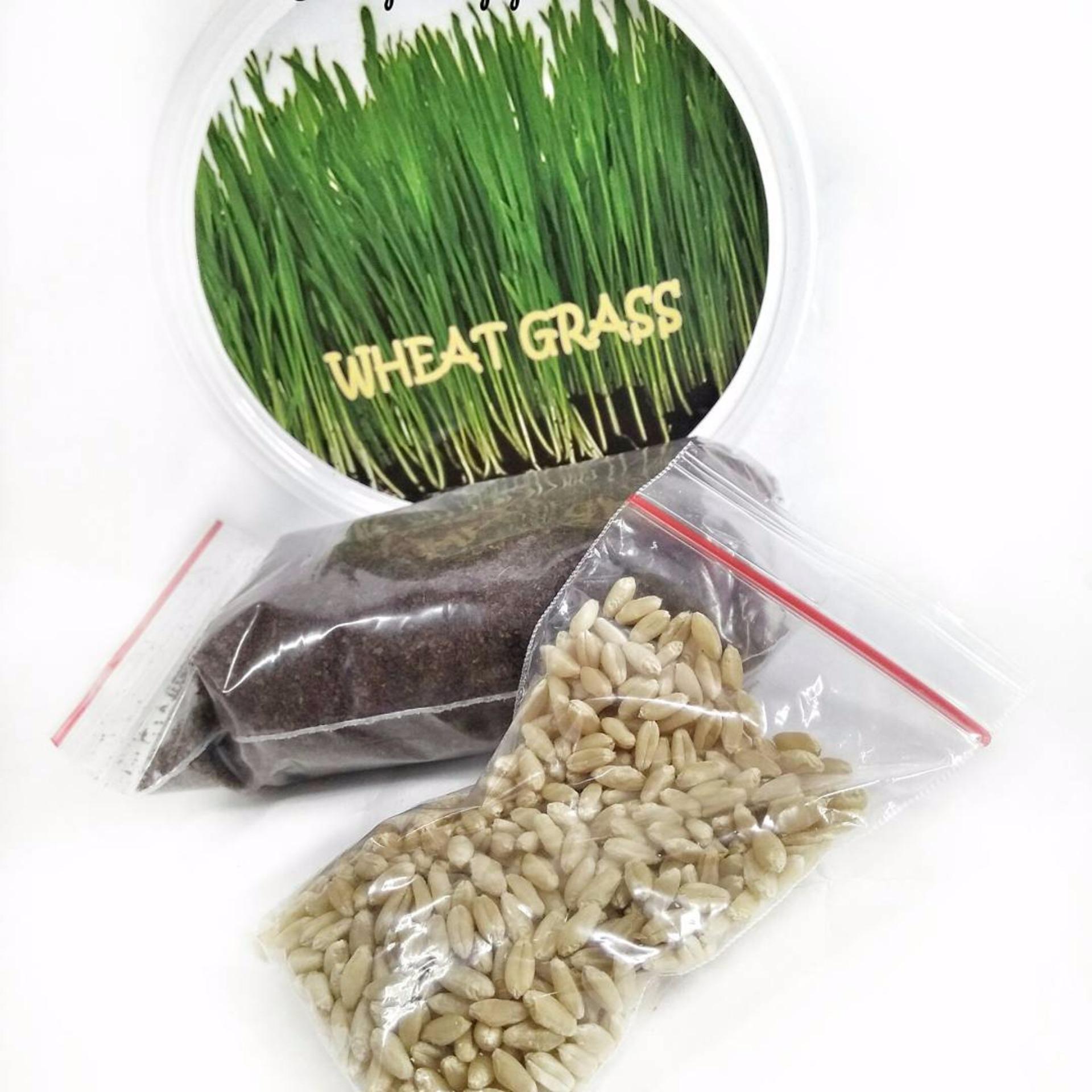 Bibit rumput untuk hewan peliharaanmu