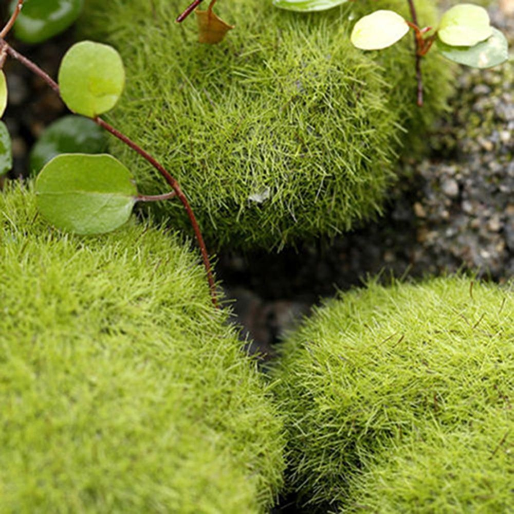 Bluelans(R) 1 Pc Miniature Stone Moss Dollhouse Garden Craft Fairy Bonsai Plant Decor M: 8 Cm - intl