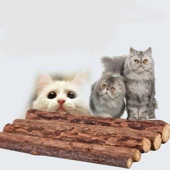 Pet Kucing Anak Kucing Mini Mewah Lembut Bermain Mainan Gigitan Source · 5 buah Pet mengunyah