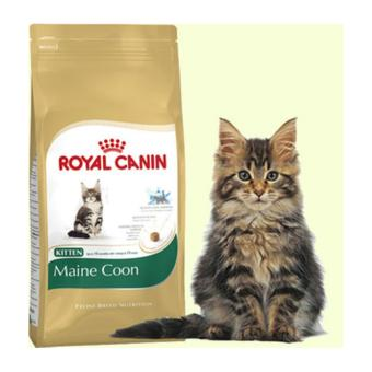 Harga Royal Canin Kitten Maine Coon 400gr