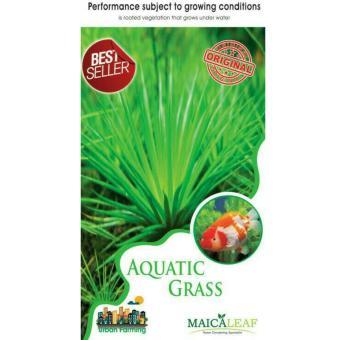 Maica Leaf Rumput Aquarium / Aquatic grass Benih Tanaman [35 benih]