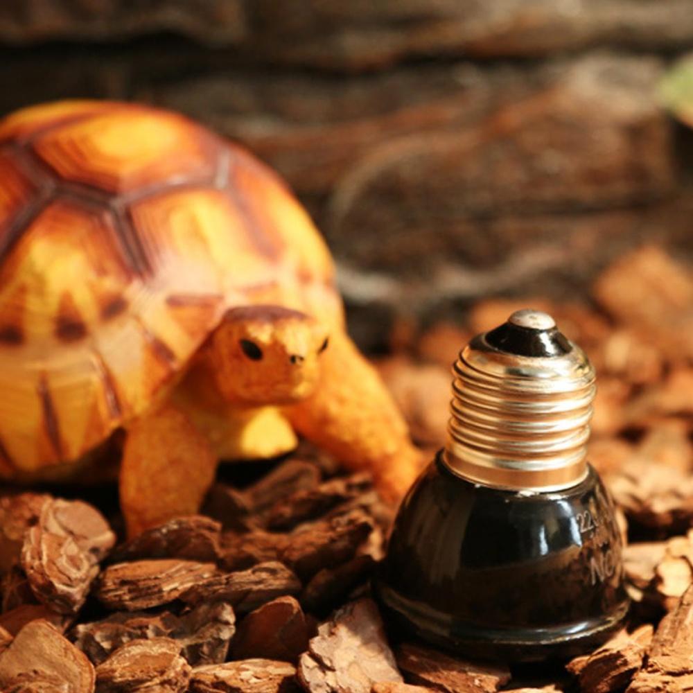 REPTILE HEAT LIGHT 20W Day Night Amphibian Bird Snake Lamp Basking - intl